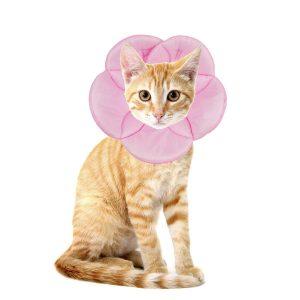 AnnaEye Recovery E-Collar Comfortable Cat Cone