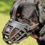 Barkless XS-to-XL Soft Silicone Basket Dog Muzzle