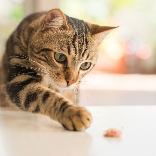 Best Automatic Cat Feeder – Reviews & Buying Guide