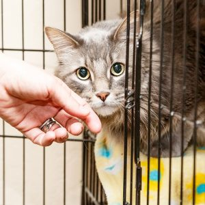 Best Cat Cage