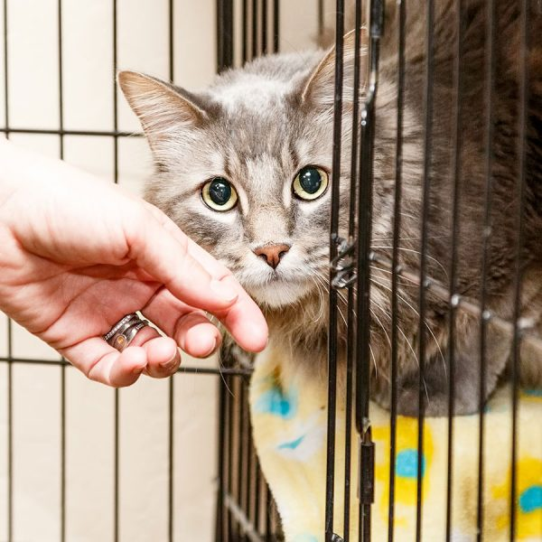 Best Cat Cage – Reviews & Buying Guide