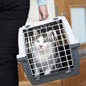 Best Cat Carrier