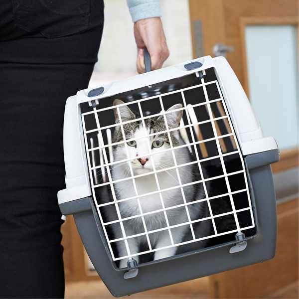 Best Cat Carrier – Reviews & Buying Guide