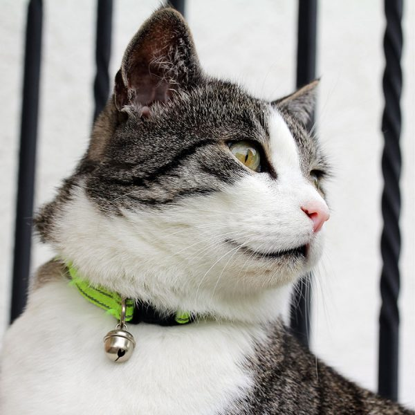 Best Cat Collar – Reviews & Buying Guide