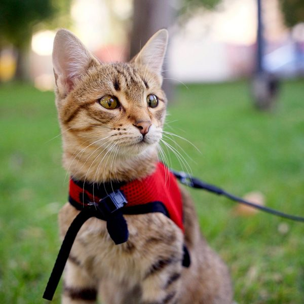 Best Cat Harness • Reviews & Buying Guide