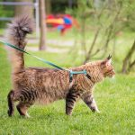 Best Cat Leash
