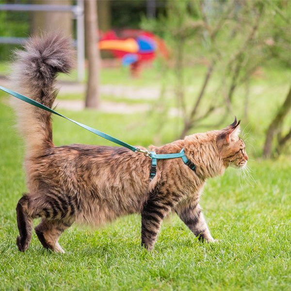 Best Cat Leash – Reviews & Buying Guide