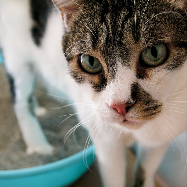 Best Cat Litter • Reviews & Buying Guide