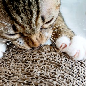 Best Cat Scratching Pad
