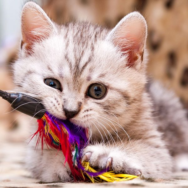 Best Cat Toy – Reviews & Buying Guide