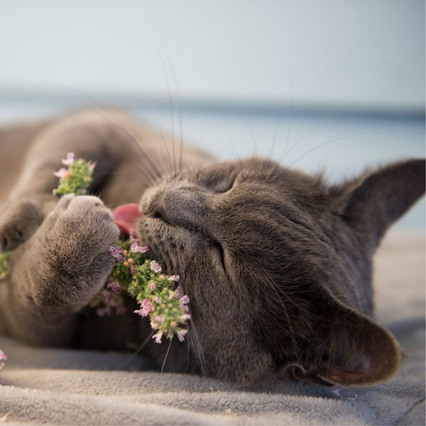 Best Catnip • Reviews & Buying Guide