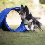 Best Dog Agility Tunnel