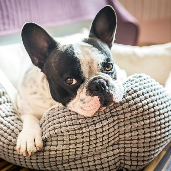 Best Dog Bed – Reviews & Buying Guide