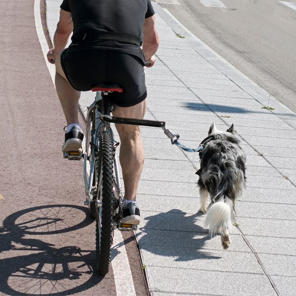 Best Dog Bicycle Leash • Reviews & Buying Guide