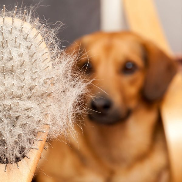 Best Dog Brush – Reviews & Buying Guide