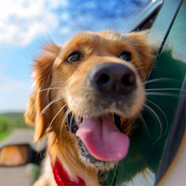Best Dog Car Seat – Reviews & Buying Guide