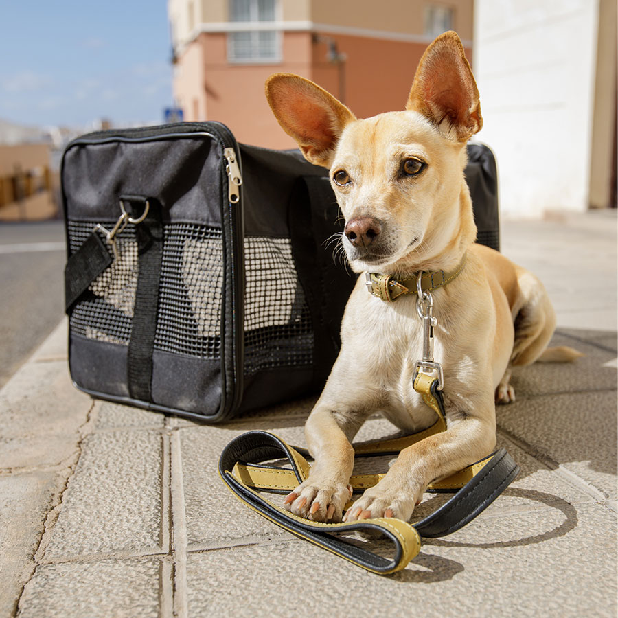 Best Dog Carrier