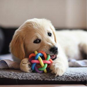 Best Dog Chew Toy