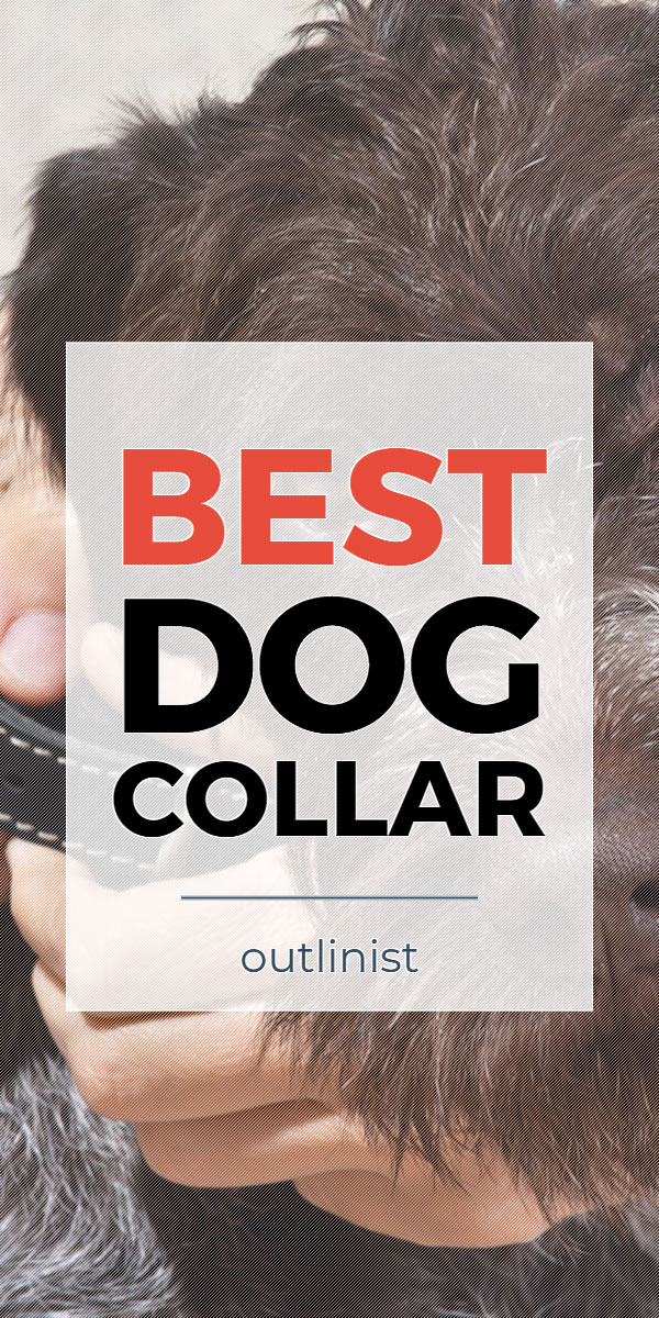 Best Dog Collar • Reviews & Buying Guide
