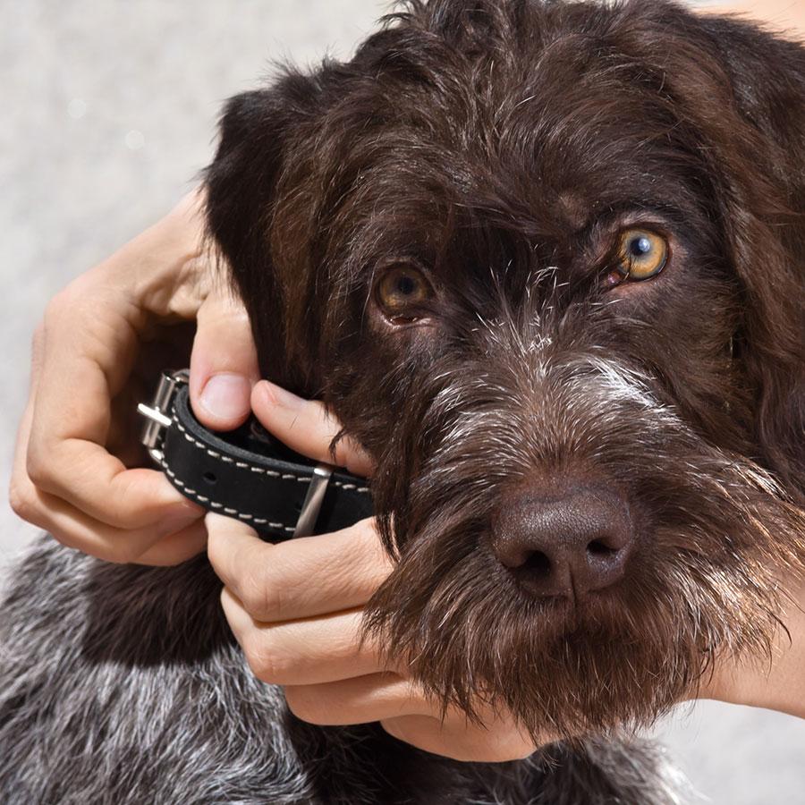 Best Dog Collar
