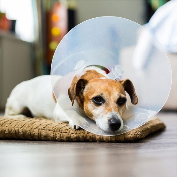 Best Dog Cone • Reviews & Buying Guide