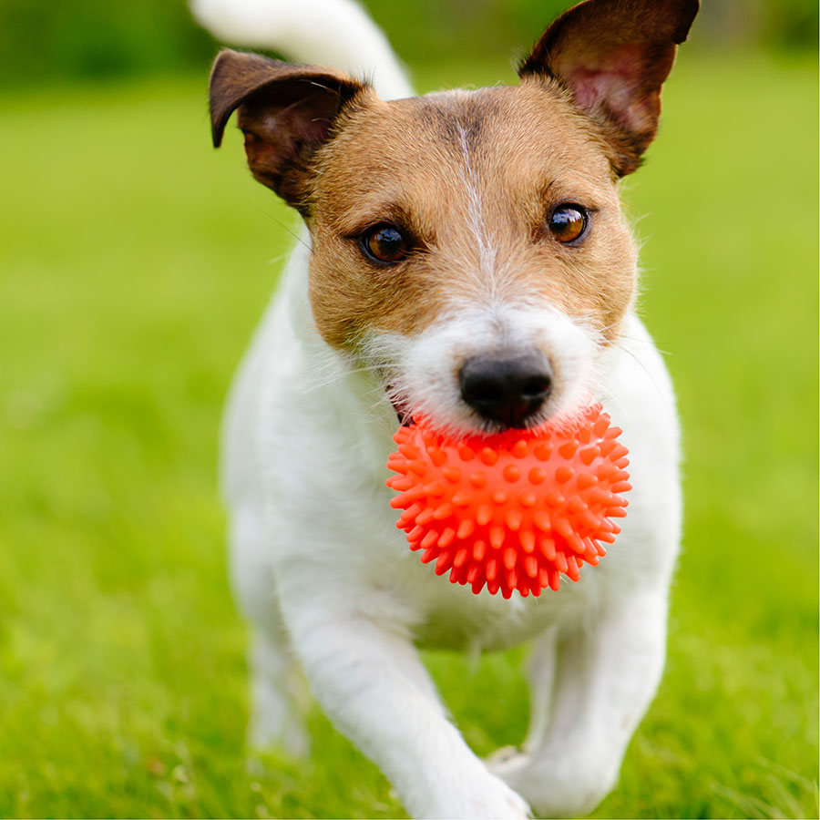 Best Dog Fetch Toy
