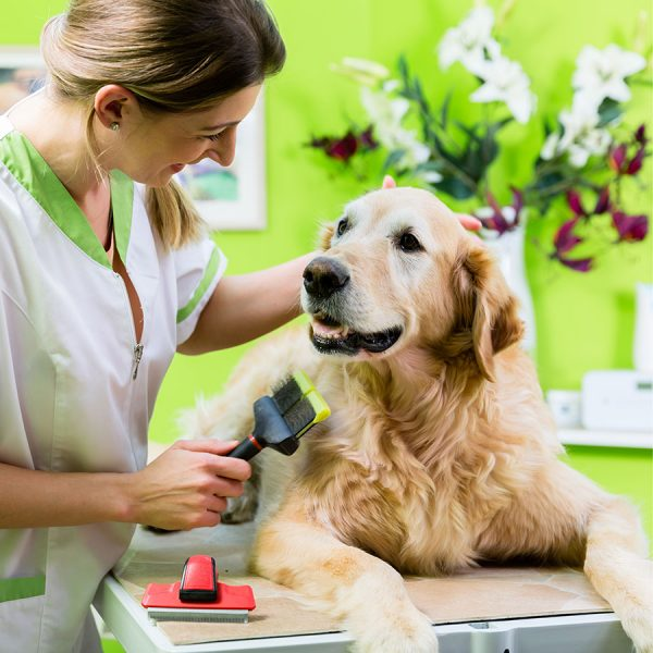 Best Dog Grooming Table • Reviews & Buying Guide