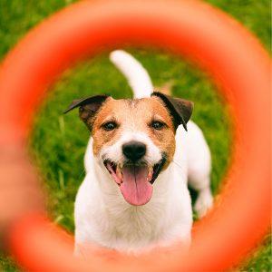 Best Dog Interactive Toy