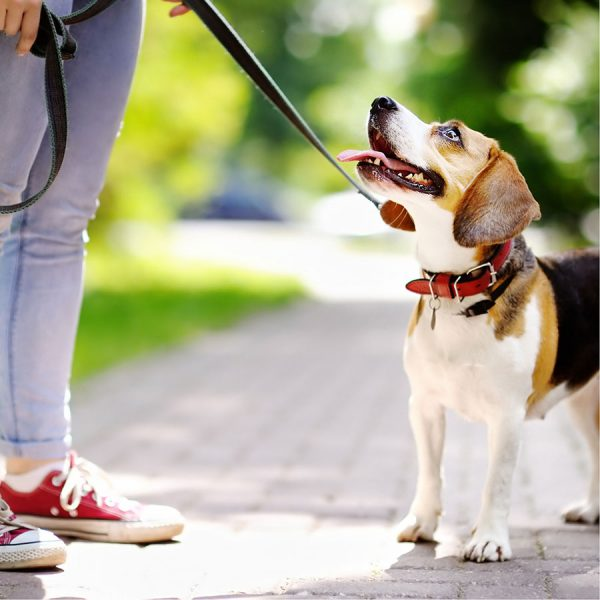 Best Dog Leash • Reviews & Buying Guide