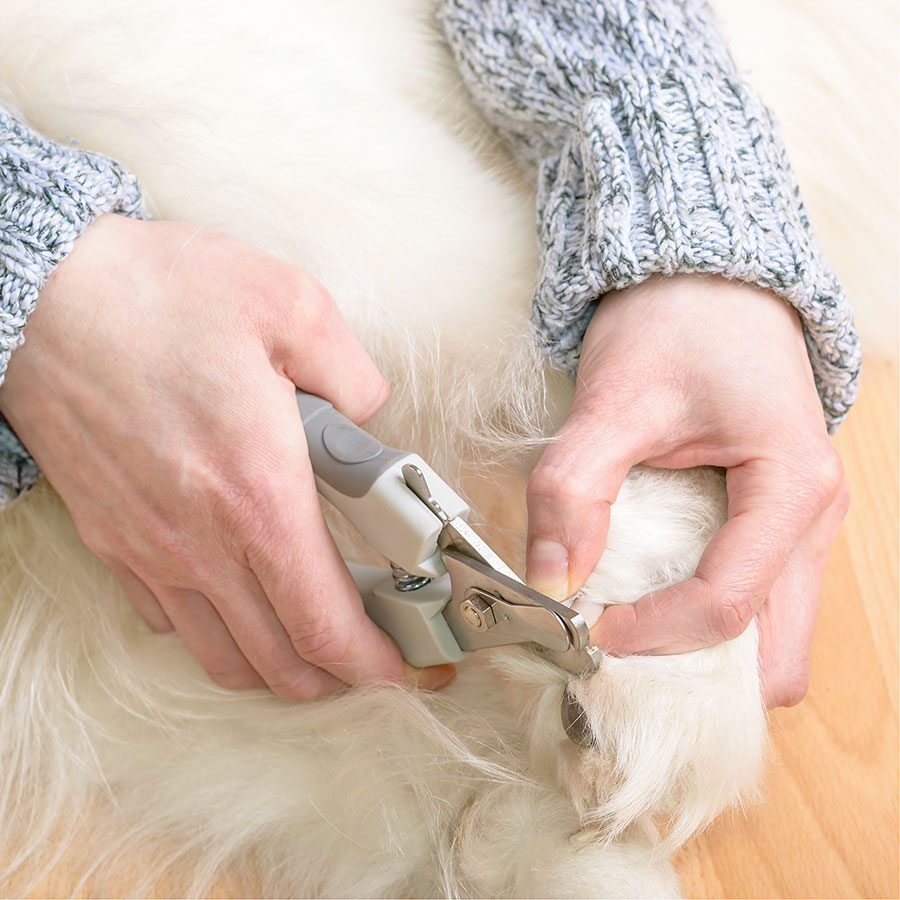 Best Dog Nail Clipper