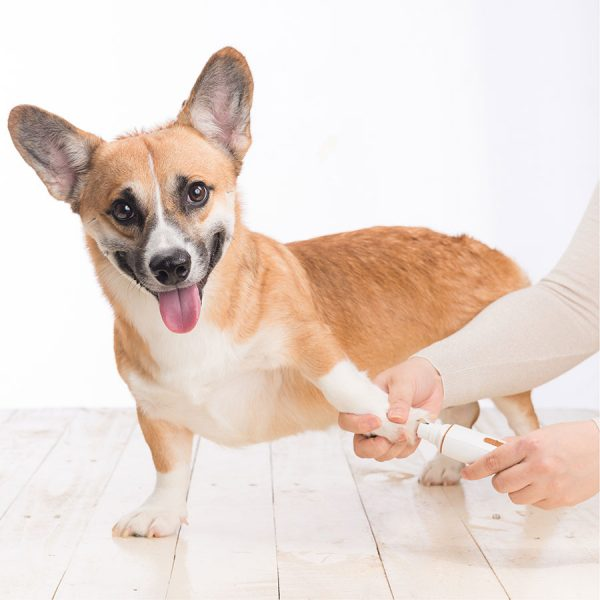 Best Dog Nail Grinder – Reviews & Buying Guide