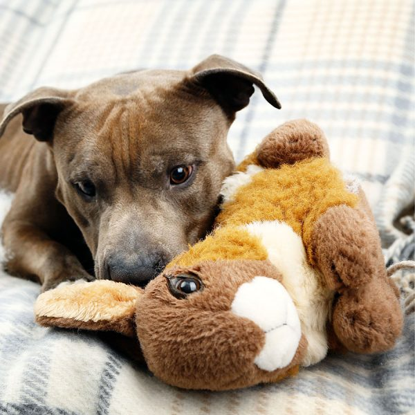 Best Dog Plush Toy • Reviews & Buying Guide