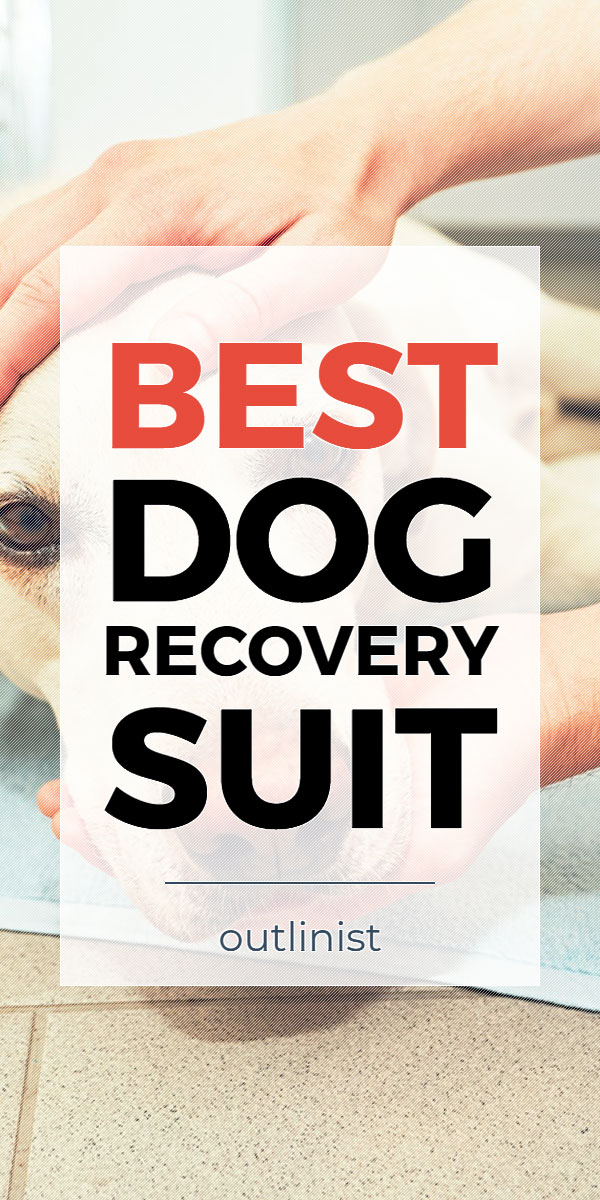 Best Dog Recovery Suit • Reviews & Buying Guide