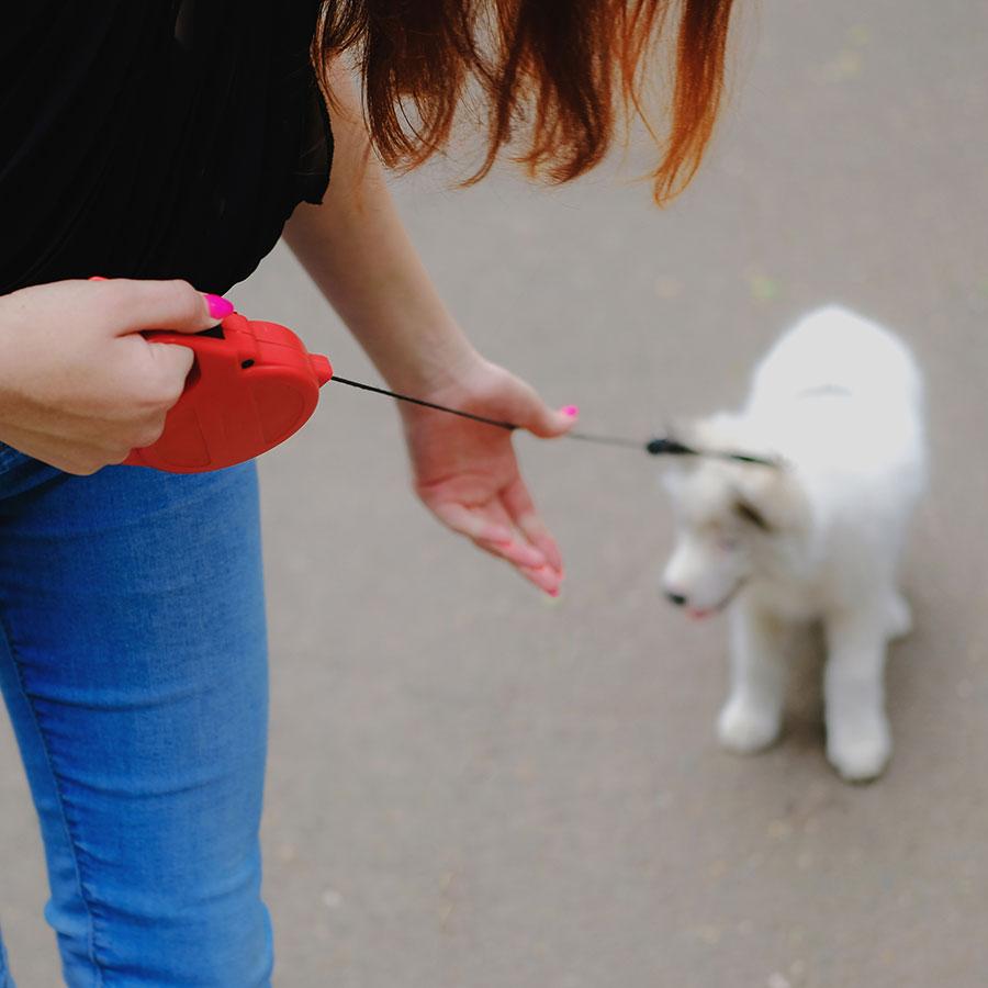 Best Dog Retractable Leash
