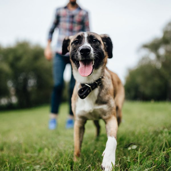 Best Dog Training Collar – Reviews & Buying Guide