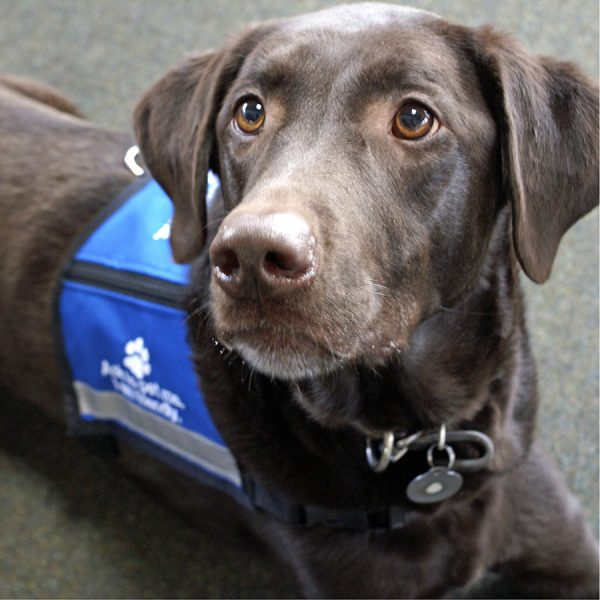 Best Service Dog Vest • Reviews & Buying Guide