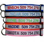 GoTags Custom Embroidered Safety Basic Dog Collar